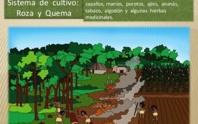 The Guarani Farming System Inside the Jungle
