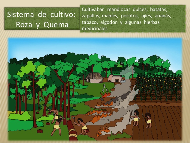 The Guarani Farming System Inside the Jungle